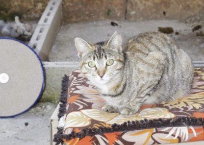 Más gatitos en adopción